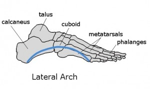 Lateral Arch