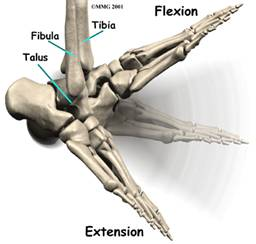 biomechanical  ankle equinus_clip_image002